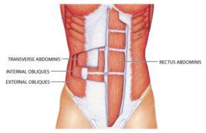 les abdominaux: Comprendre et les situer