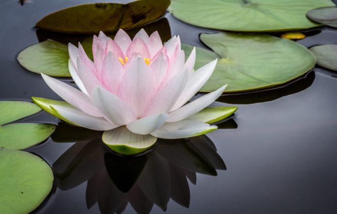 conseils pour débutant en yoga toulouse
